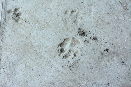 Animal footprints on concrete floor. Gray concrete floor with footprints.