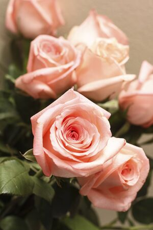Six nice pink roses in detail  photo