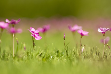 Fresh spring grass with flowers on a sunny day with natural blurred background photo