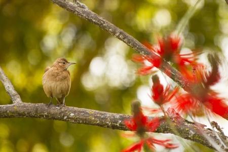 orden: Bird on a branch