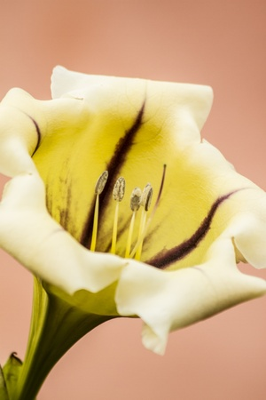 exotic flower: yellow exotic flower