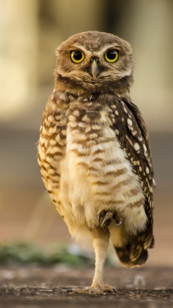 Owl looking attentive, with large yellow eyes  photo