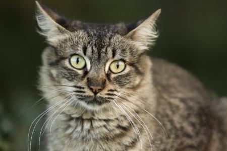san isidro: Portrait of cat  Stock Photo