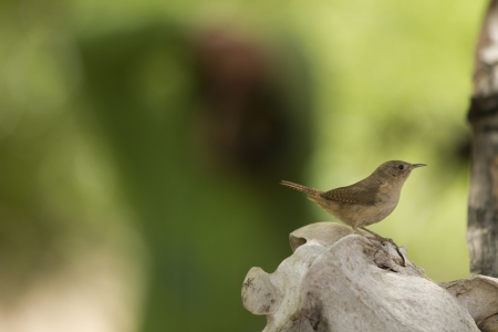 orden: Little bird carring food to the nest and photographer on the background takeing some photos  Stock Photo
