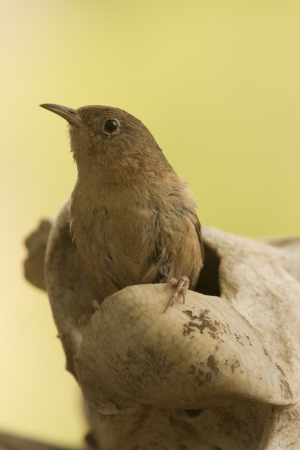 naturaleza: Small little brown bird standing with natural background