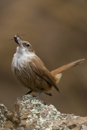 Small little brown bird standing with natural background  photo