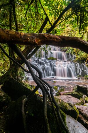 In a temperate rainforest on New Zealand's South Island a roaring waterfall flows along the rocky bank. A mossy tree branch dominates the foreground.