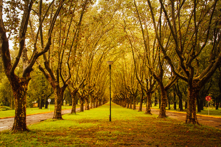 isidro: Boulevard de San Isidro (Argentina) at the beginning of fal ? or