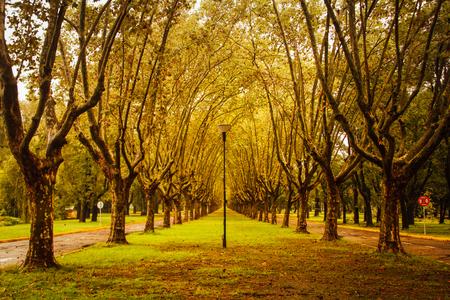 Boulevard de San Isidro (Argentina) at the beginning of fal ? or