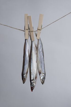 Silver fish hanging on a rope