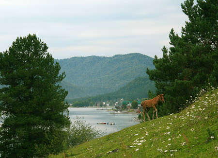 View from the hillside on Lake Teletskoye  Altai Mountains