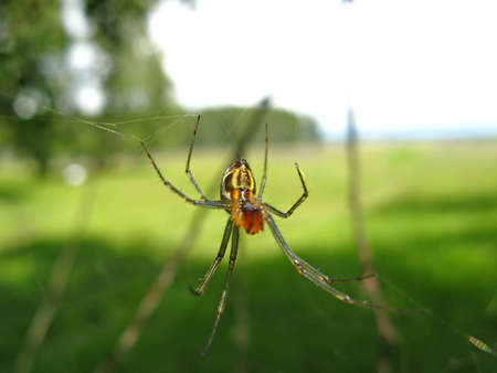The spider weaves its web  Close-up