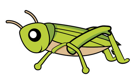 cricket insect: grasshopper Illustration