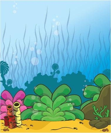 bubble sea anemone: underwater scenery