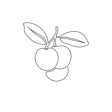 One continuous line drawing of whole healthy organic longan for orchard  identity. Fresh fruitage concept for fruit garden icon. Modern single line draw graphic design vector illustration