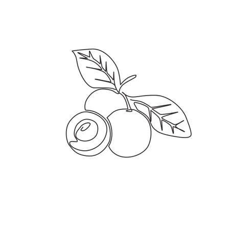 Single continuous line drawing of whole and cut healthy organic longan for orchard  identity. Fresh fruitage concept for fruit garden icon. Modern one line graphic draw design vector illustration