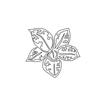 Single continuous line drawing cute tropical leaves aglaonema plant from top view. Printable decorative houseplant concept for home wall decor. Modern one line draw design vector graphic illustration Illustration