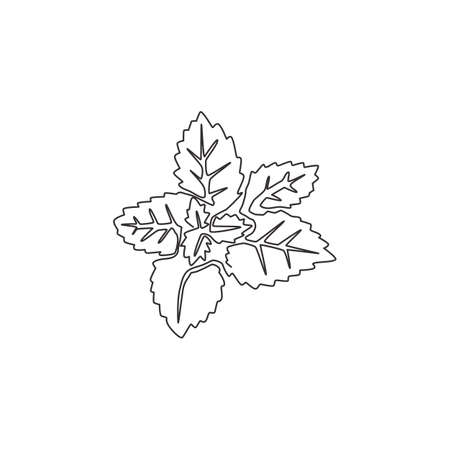 Single continuous line drawing of healthy organic mint leaves for farm logo identity. Fresh mentha plant concept for plantation icon. Modern one line draw design graphic vector illustration
