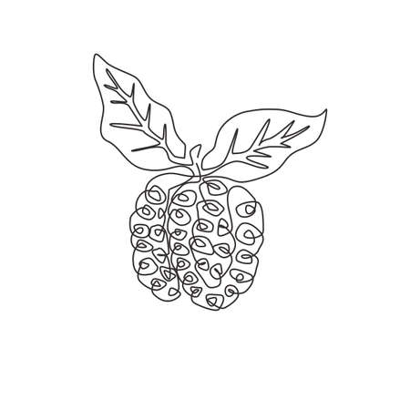One single line drawing of whole healthy organic noni for orchard logo identity. Fresh tropical fruitage concept for fruit garden icon. Modern continuous line draw design graphic vector illustration