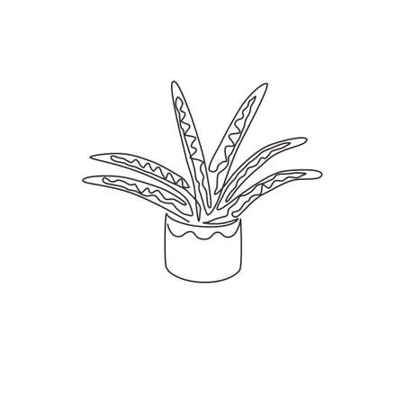 Single continuous line drawing of potted snake plant for home decor logo identity. Fresh evergreen perennial plant concept for  plant icon. Modern one line draw design graphic vector illustration