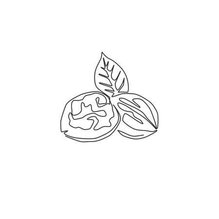 Single continuous line drawing whole healthy organic walnut and leaves for orchard logo identity. Fresh nutshell concept for healthy seed icon. Modern one line draw design vector graphic illustration