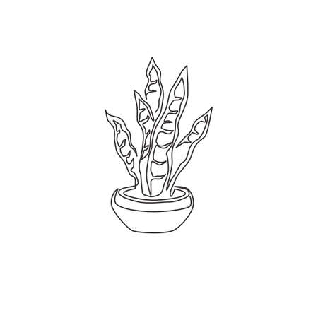One continuous line drawing of potted snake plant for home decor logo identity. Fresh evergreen perennial plant concept for  plant icon. Modern single line draw design vector graphic illustration Ilustrace