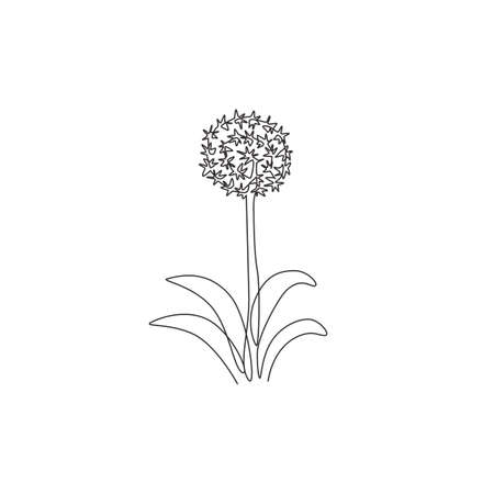 Single one line drawing of beauty fresh allium giganteum for garden logo. Decorative giant onion flower concept home decor wall art poster print. Modern continuous line draw design vector illustration
