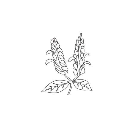 Single one line drawing beauty fresh pachystachys lutea for garden logo. Decorative lollipop plant flower for home decor wall poster print art. Modern continuous line draw design vector illustration