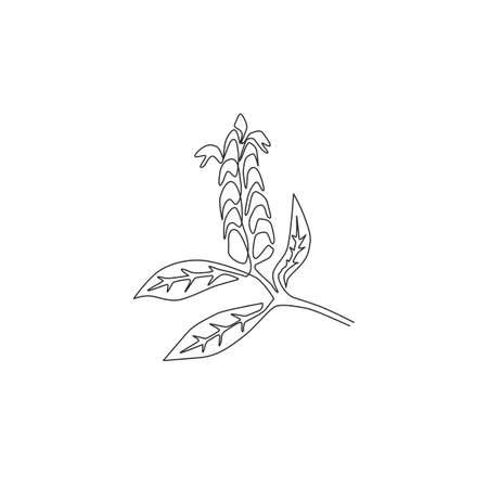 Single continuous line drawing of beauty fresh lollipop plant for home decor wall art poster print. Decorative pachystachys lutea for floral card frame. Modern one line draw design vector illustration