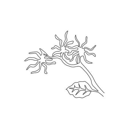 Single continuous line drawing beauty fresh witch hazels for home wall decor art poster print. Decorative snapping hazel plant concept for floral card. Modern one line draw design vector illustration Vecteurs