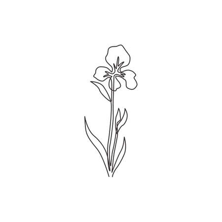 One continuous line drawing beauty fresh perennial plants for wall decor home art poster print. Decorative iris flower concept for invitation card. Modern single line draw design vector illustration