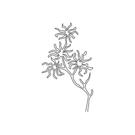 One continuous line drawing beauty fresh witch hazels for home art wall decor poster print. Decorative deciduous shrubs plant concept for invitation card. Single line draw design vector illustration Vecteurs