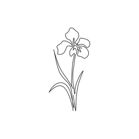Single continuous line drawing  beauty fresh perennial plants for home art wall decor poster print. Decorative iris flower for greeting card ornament. Modern one line draw design vector illustration