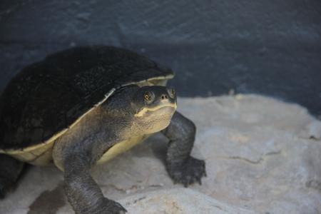 Wild Life Zoo Turtle