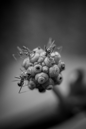 Micro Photography of Ants on a Flower