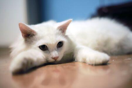 Cute Cat at Cat Cafe