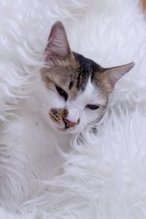 Stock Photo - Cute cat lying on the garden