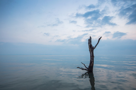 Dead mangrove tree on the beach on Koh Chang island in Thailand. Symbol of nature degraded from global warming.