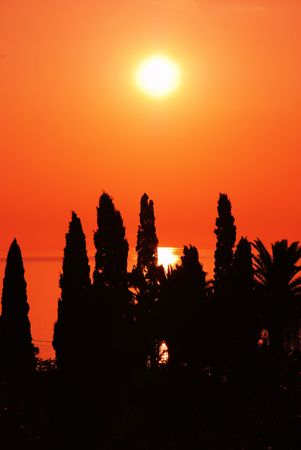 orange sunset over sea behind black tree silhouettes photo