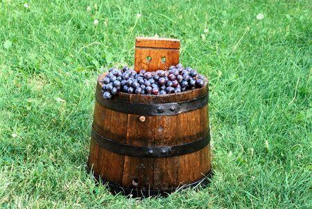 oaken: purple grapes in archaic wooden barrel over green grass