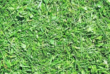 mugger: cut green grass and plans background closeup