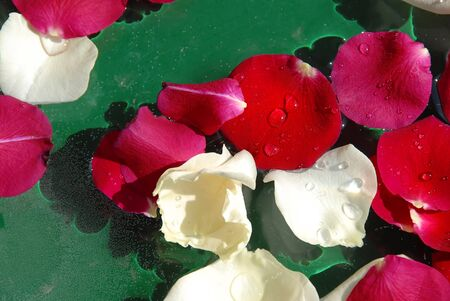 white and red rose petals floating in water over green background photo