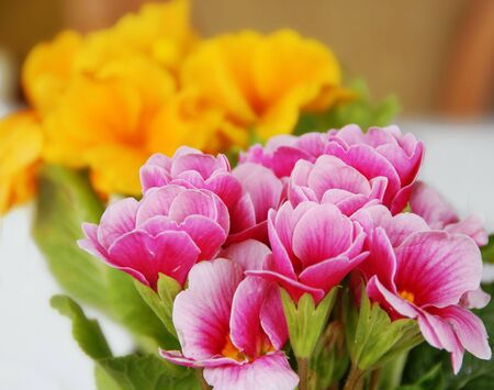 pink and yellow spring flowers natural background Stock Photo - 4891526