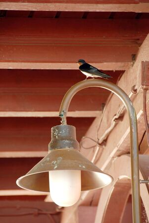 swallow on torch under wooden roof ceiling photo