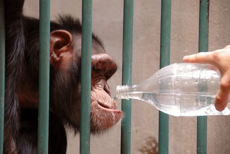 monkey in cage drinking water from plastic bottle photo