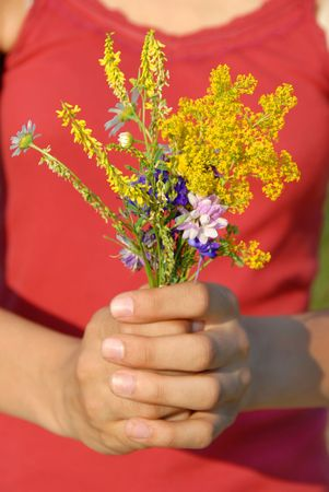 various summer field flowers bouquet in girl hands photo