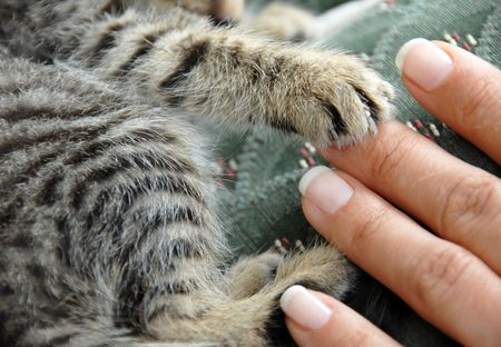 playful behaviour: cat pad and human fingers friendly touch