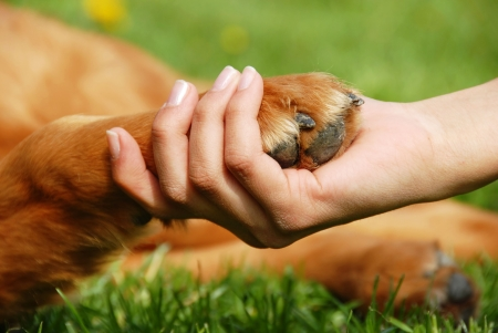 yellow dog paw and human hand shaking, friendship Stock Photo