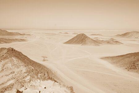 Sahara desert with lonely tree near Hurghada, Egypt photo