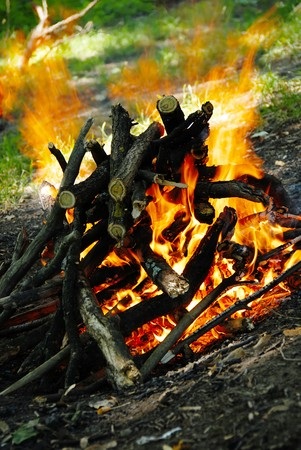 scenic burning woods in yellow fire outdoor Stock Photo - 7673110